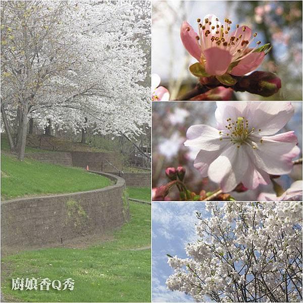 春神來了_4