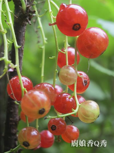 自製水果醋_4