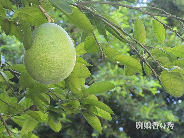 柚香戚風蛋糕_3