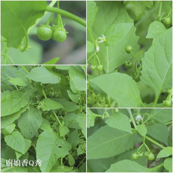 野菜龍葵粥_1