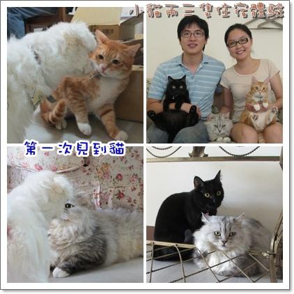 小貓-01.jpg
