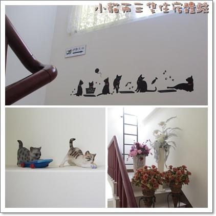 小貓-8.jpg