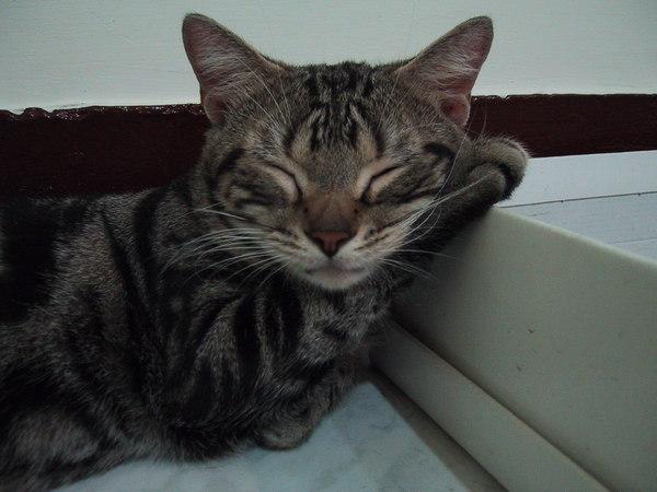 貓手當枕頭
