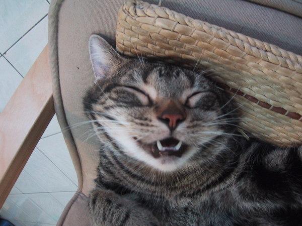 睡到貓嘴都張開了