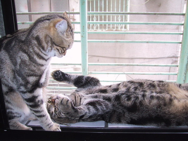 窗台的對話