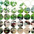 玉樹111.jpg