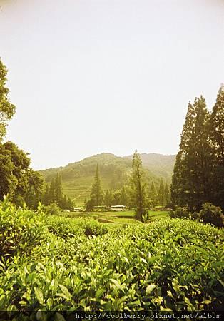 杭州 - 龙井茶园