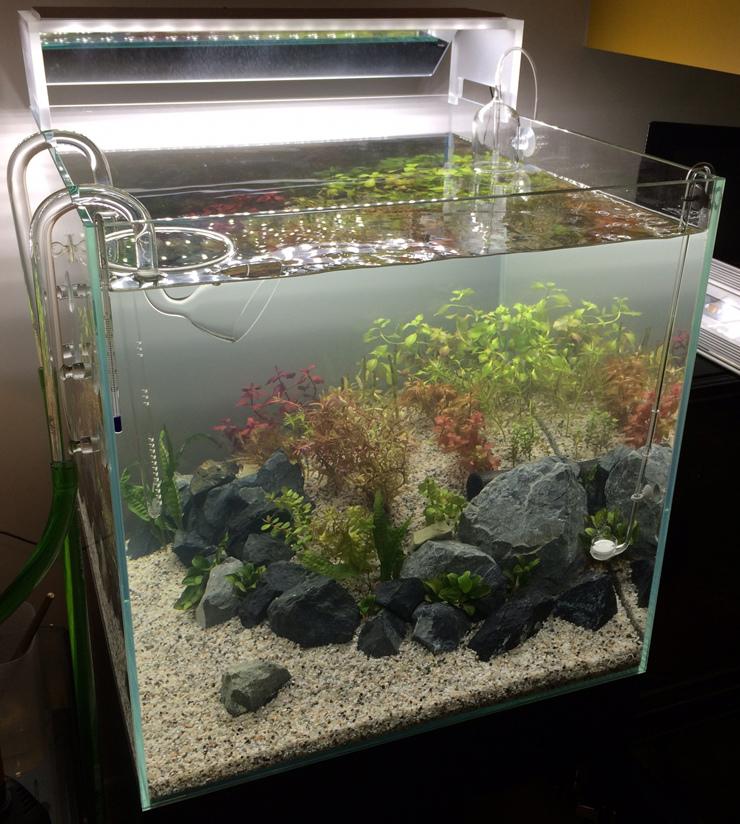 2017-04-15 翻缸後重新養菌中的水草缸