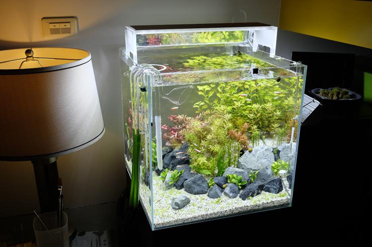 2017-04-30 充滿活力的水草缸