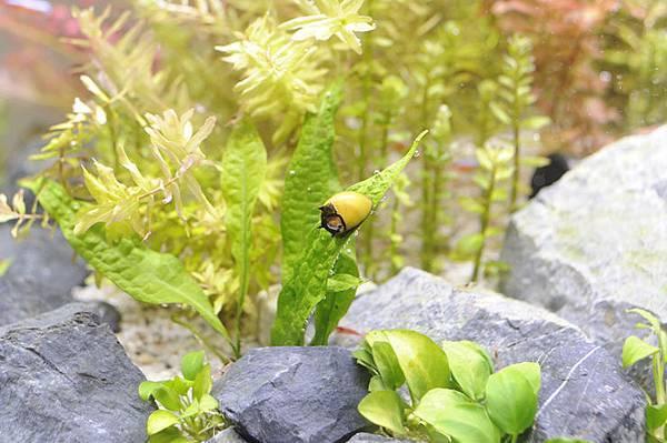 2017-05-04 蜜蜂角螺