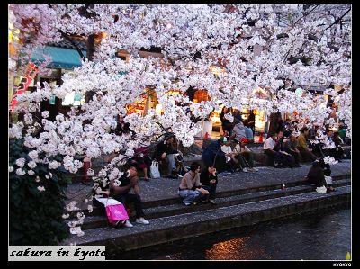 2005.4三条の桜