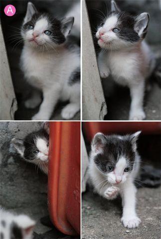 a母貓1.jpg