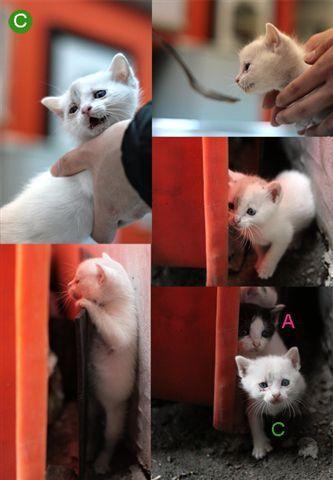 C母貓1.jpg