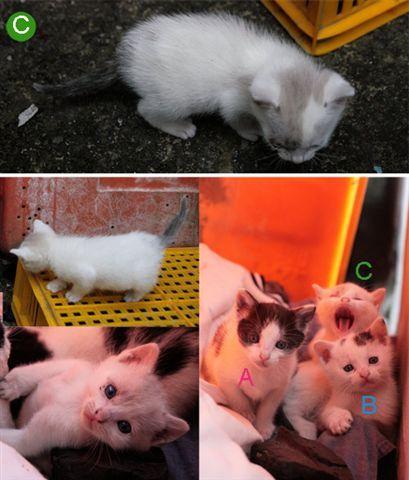C母貓2.jpg