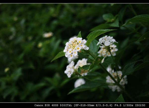 IMG_4680.JPG