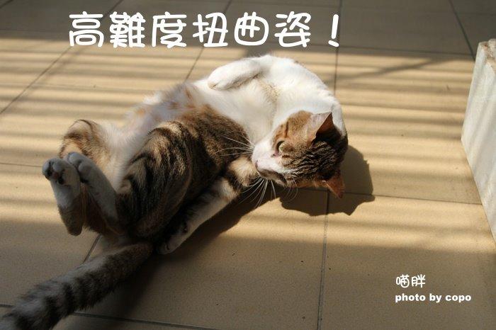 IMG_3773.JPG