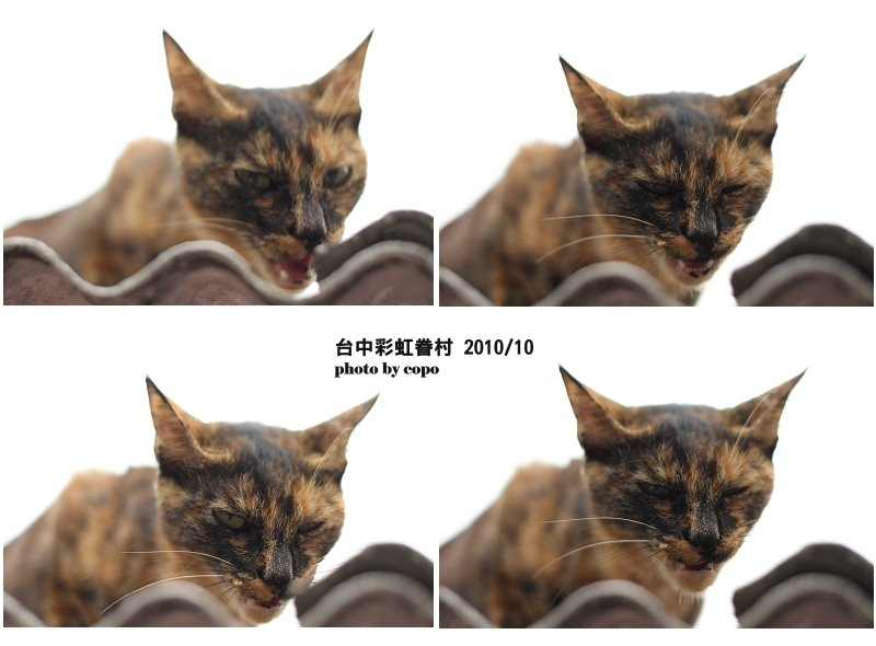 IMG_9513-1.jpg