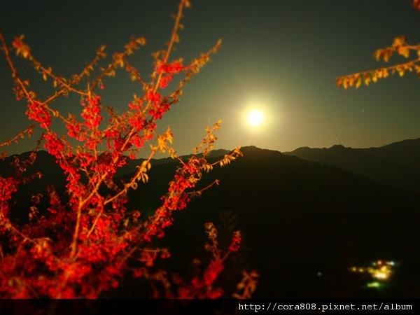 120211_鳥嘴山 - 050.jpg