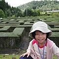 120915_清境+梅峰農場 - 72