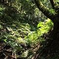 053_檜木步道