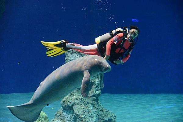 可愛的海牛.jpg