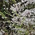 2014-03-01 10-13-55.jpg