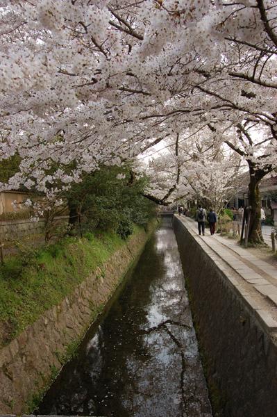 春天最棒的散步道