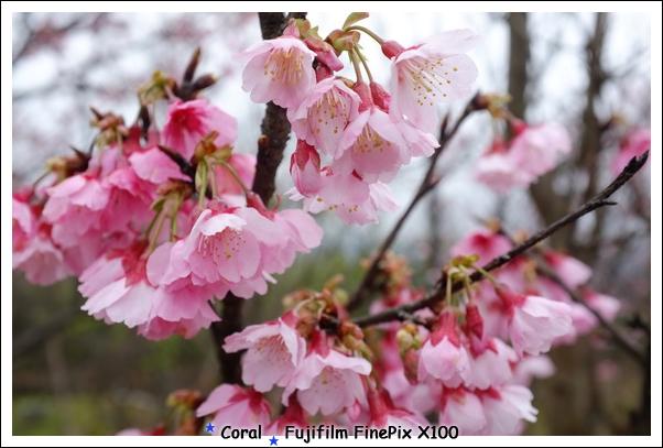 沿路很多櫻花樹呢!!