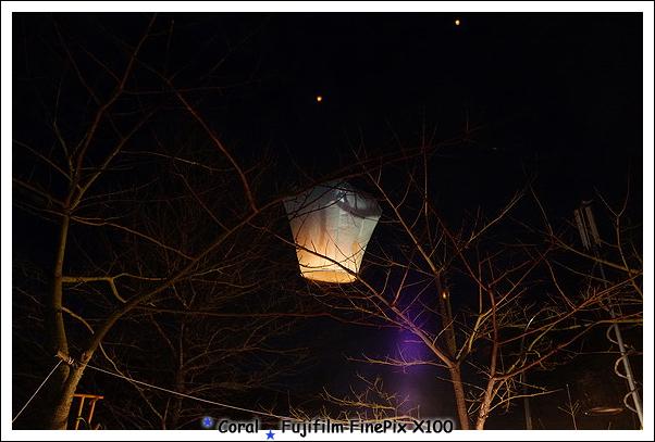 卡在樹上飛不上去