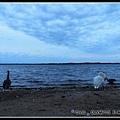 傍晚昏暗暗的天鵝湖