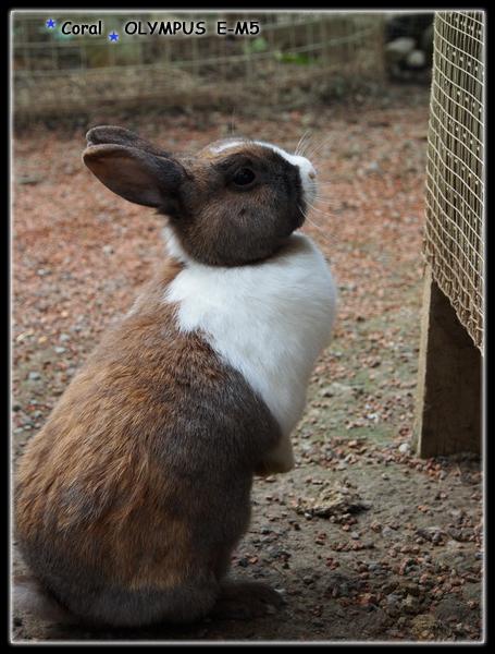可愛動物區少不了的兔子