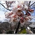 是粉嫩嫩的櫻花呀!!