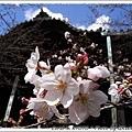 日本さくら名所100選に選定された関西一の早咲きの桜