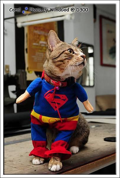Supercat Puma登場!!