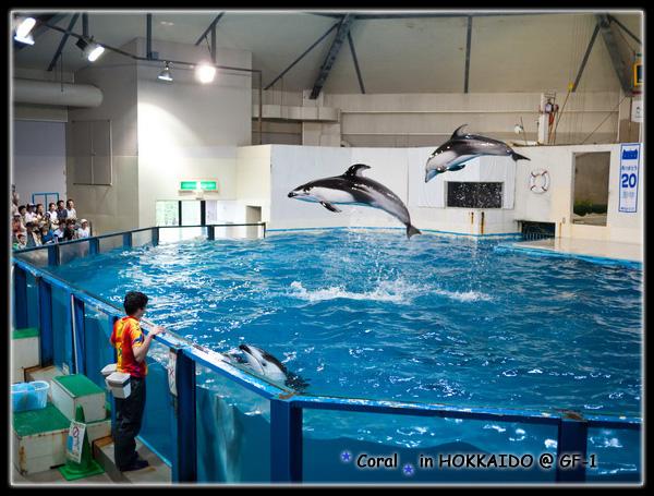 一直在表演跳高高的海豚