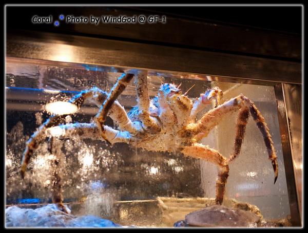 長腿大螃蟹