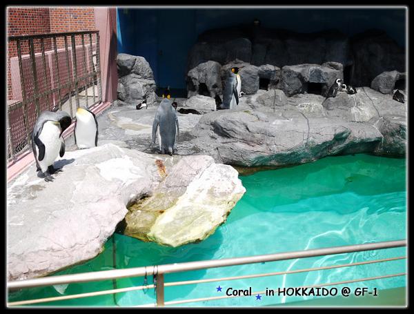 哇屋~~~好多企鵝,還沒到上班時間,他們在發呆休息