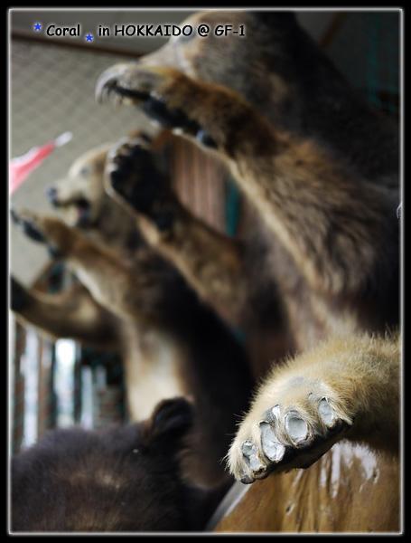 喔喔...可憐的熊爪,被拔光光了