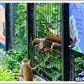 會偷跑出來的松鼠猴