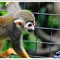 好動的松鼠猴