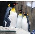 企鵝館人氣很旺