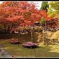 火紅的楓葉登場