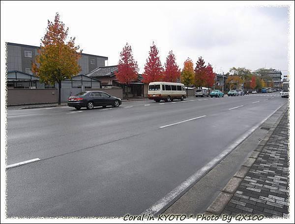 二條城附近的行道樹
