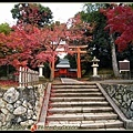 火紅的嵐山楓葉