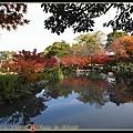 東寺的楓樹沿著湖邊種