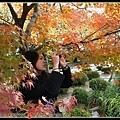 楓樹叢內專注拍照