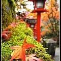 可以來京都賞楓真幸福