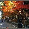 南禪寺的楓葉