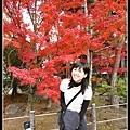 京都冷好幾天囉!!今天終於回暖