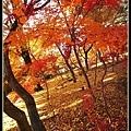 有機會到京都賞楓要來一趟永觀堂唷!!
